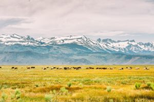 snowo-n-mountains-about-podunk's-ranch