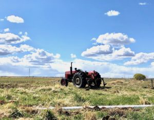 red-tractor-podunk's-ranch-artisan-beef