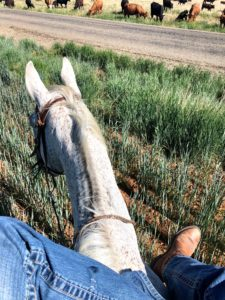 horse-view-podunk-ranch